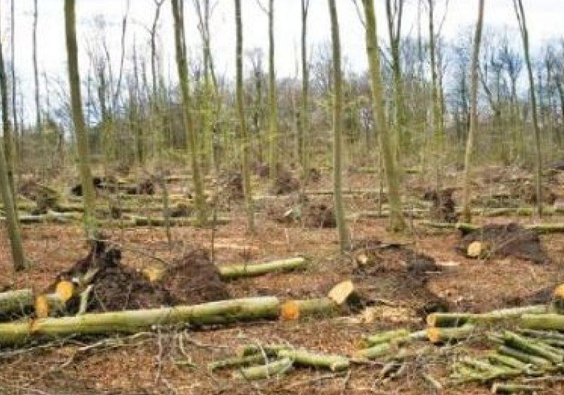 """Acţiuni în cadrul planului naţional """"Scutul Pădurii"""""""