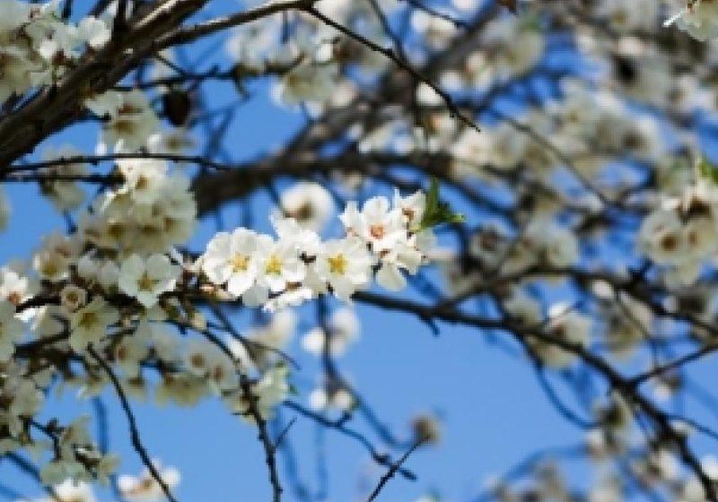 Aproximativ 1,5 milioane de români îşi aniversează onomastica de Florii
