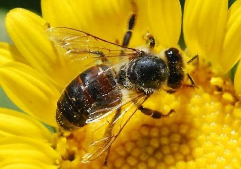 O nouă taxă pentru apicultori