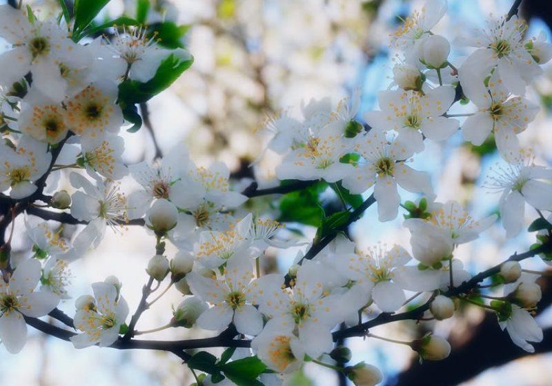 Creştinii atât cei ortodocşi cât şi cei catolici au celebrat ieri duminica Floriilor