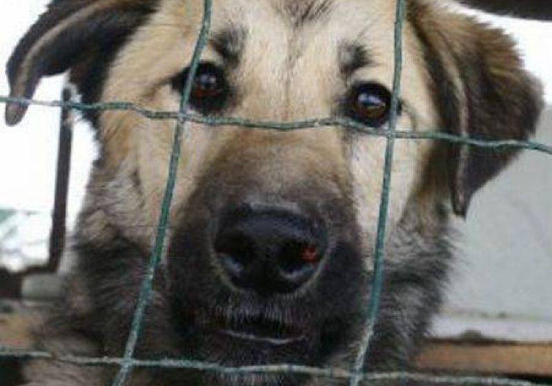 Sterilizarea sau eutanasierea câinilor fără stăpân va fi decisă de autoritățile locale
