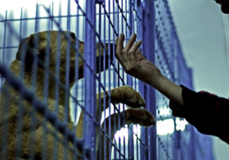 Măcel la un adăpost de animale din Botoşani: Peste 200 de câini ucişi de angajaţi ai primăriei