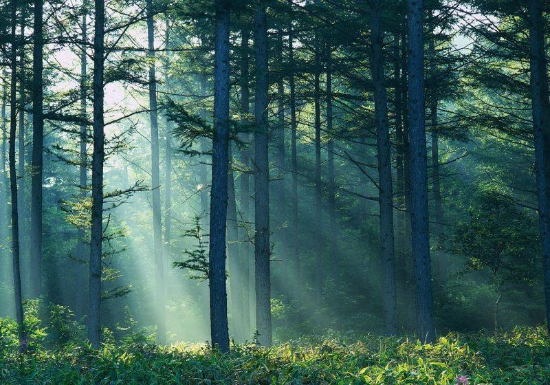 Parohia greco- catolică şi cea ortodoxă din Săpânţa continuă conflictul pentru a obţine 30 de hectare de pădure
