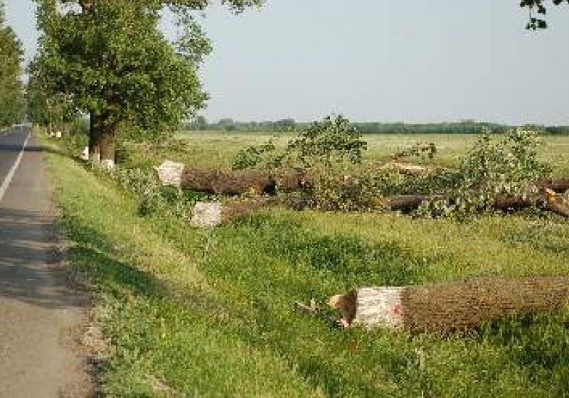 Pe Dealul Hera, un bărbat s-a accidentat grav  în timp ce tăia un copac