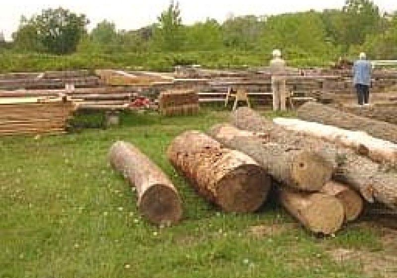 Profitând de absenţa muncitorilor forestieri, un bărbat din Sat Şugatag a sustras 2 mc de material lemnos