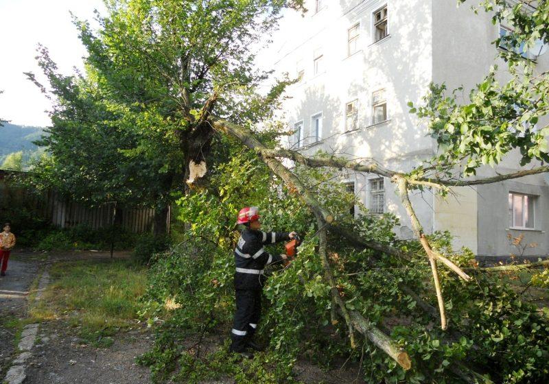 Vântul puternic a distrus maşini, reţele electrice şi copaci în întreg Maramureşul