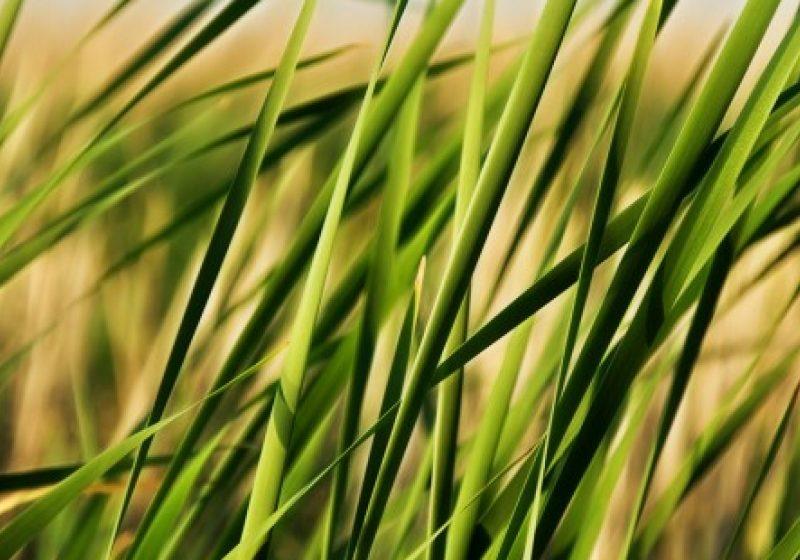 Creste iarba prin trotuarele reabilitate