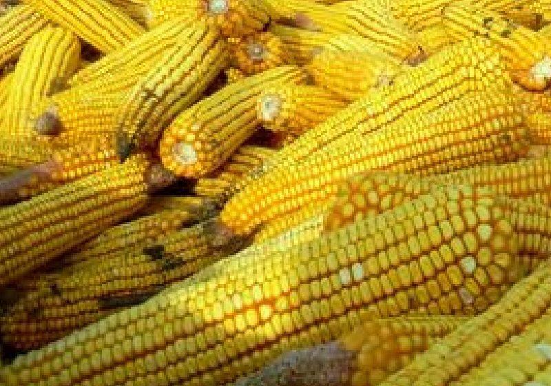 Exportul României de produse agroalimentare se apropie de un miliard de euro