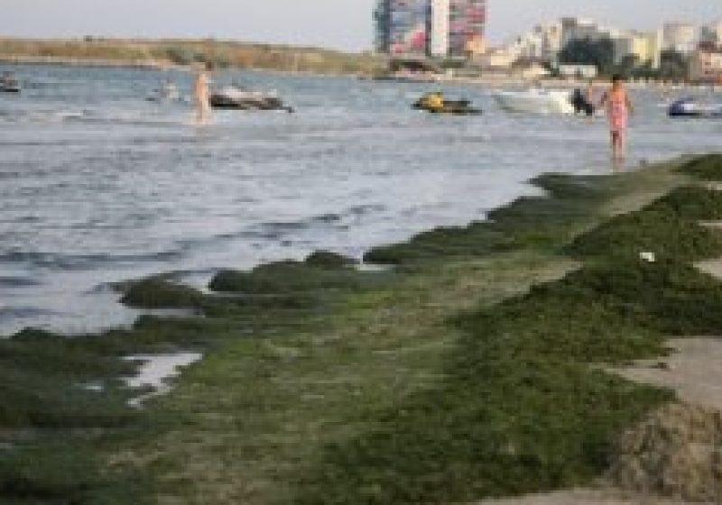 Litoralul românesc, invadat de alge: Aproape 2.000 de tone de alge au fost strânse luna aceasta de pe plaje