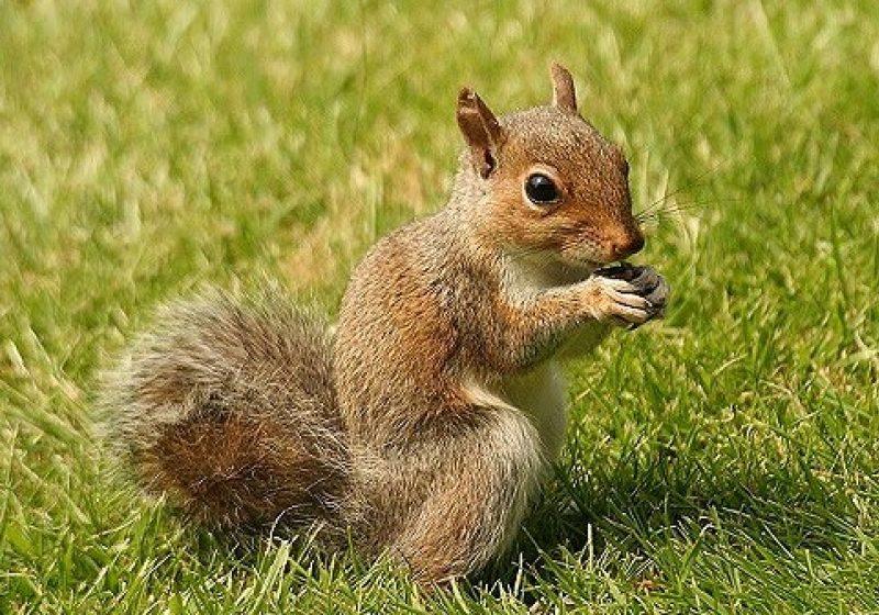 O veveriţă – prietena micuţilor sigheteni