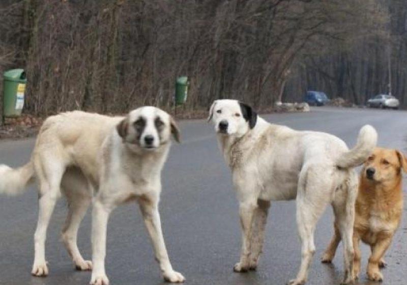 România, condamnată de CEDO pentru insuficienta protecţie a cetăţenilor împotriva câinilor vagabonzi