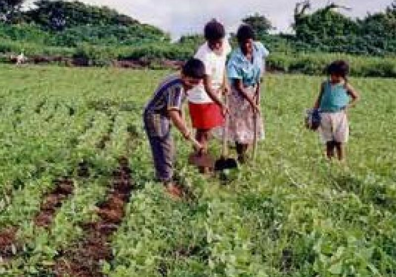 Maramures: Zeci de cereri pentru registrele pentru zilieri