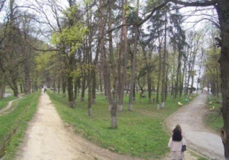 Arborii de pe aleea de la Grădina Morii, devin ameninţători