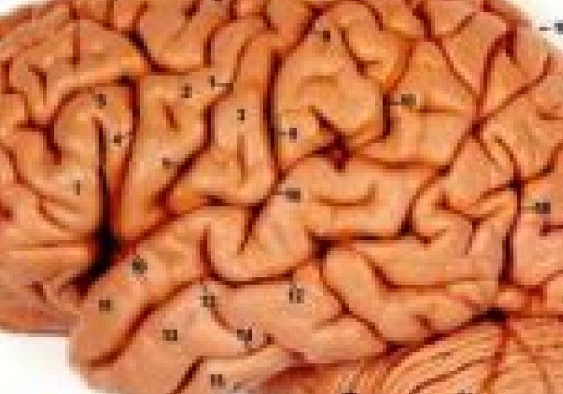 Finalul evoluţiei omenirii? Creierul uman a ajuns la capătul dezvoltării sale