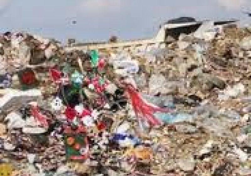 Gunoaiele depozitate in jurul cladirii fostului abator din Sighet au devenit un adevarat adapost pentru serpi si soparle