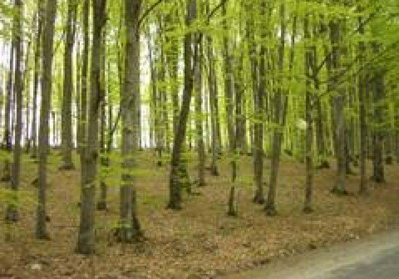 Peste 300 de hectare vor fi împădurite în 2011