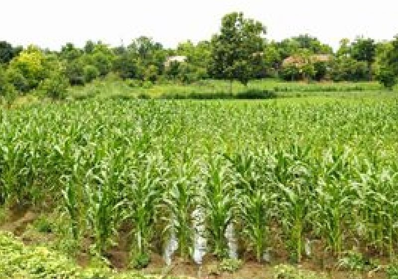 Prognoză agrometeorologică: Rezerva de umiditate din sol, satisfăcătoare în această perioadă