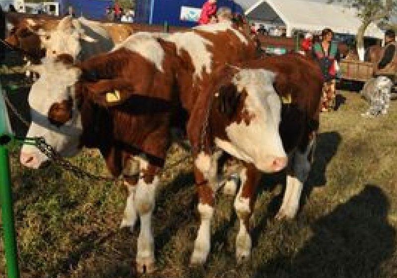 Guvernul a alocat un împrumut de trezorerie de 311 milioane euro pentru subvenţionarea fermierilor