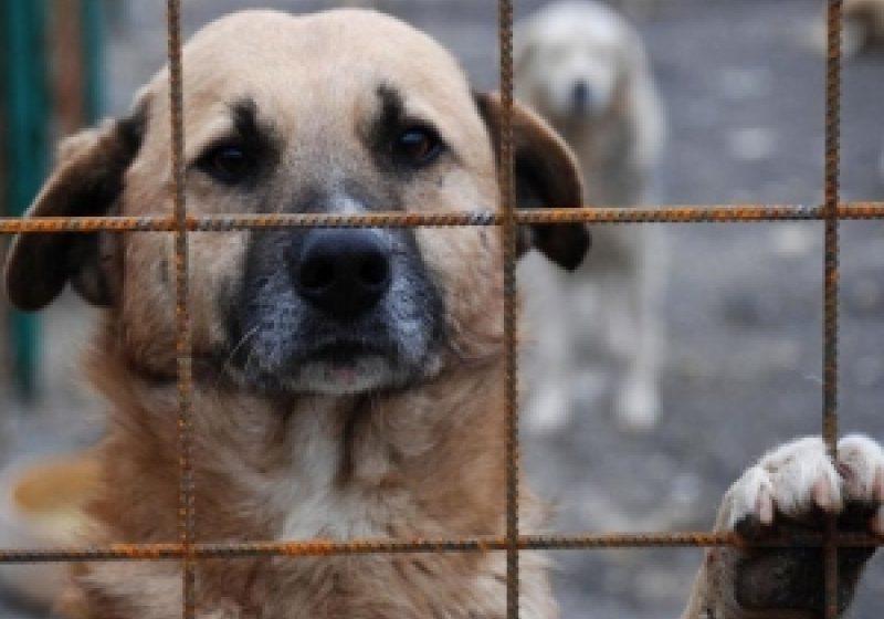 SIGHET: Au fost capturaţi şi transportaţi la adăpost 15 câini fără stăpân din cartierele sighetene