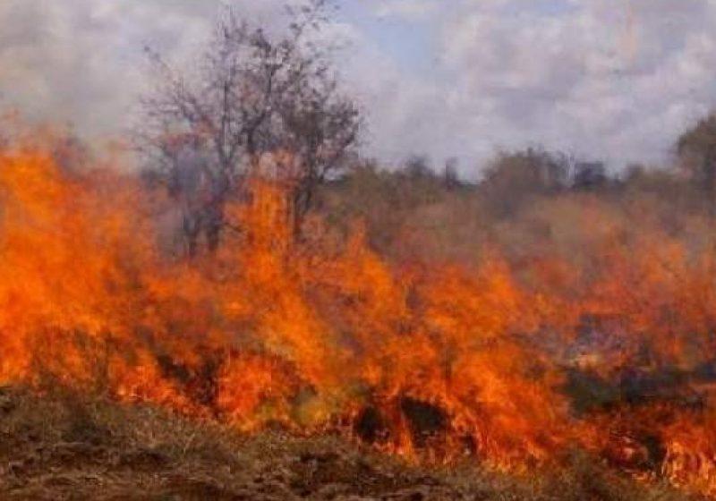 Baia Mare: Secretarii unităţilor administrativ-teritoriale din judeţ, avertizaţi în legătură cu incendiile de vegetaţie