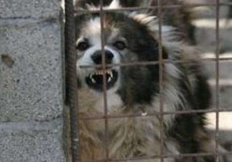 Legea câinilor fără stăpân, adoptată de deputaţi. Câinii fără stăpân vor putea fi eutanasiaţi.
