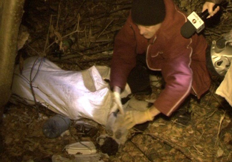 SIGHET: Şapte câini comunitari au fost ucişi fără milă şi abandonaţi pe strada Horea legaţi în saci de rafie