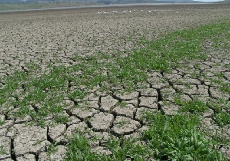 Situaţii disperate înregistrate în Maramureş din cauza secetei