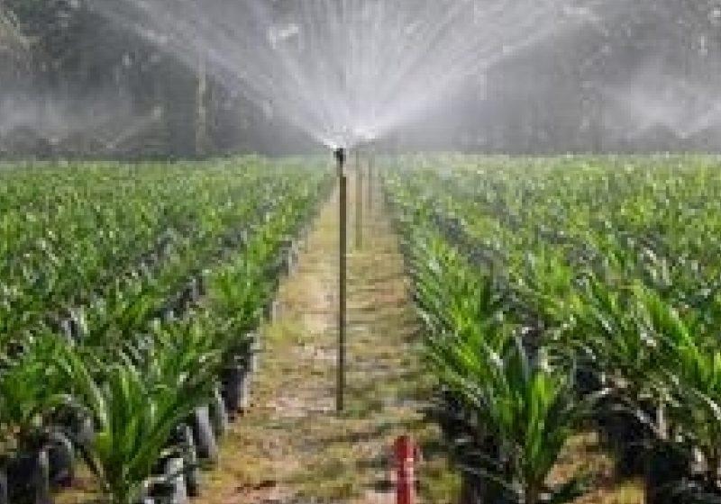 Suprafaţa agricolă deţinută de străini în România se ridică la ora actuală la peste 700.000 de hectare