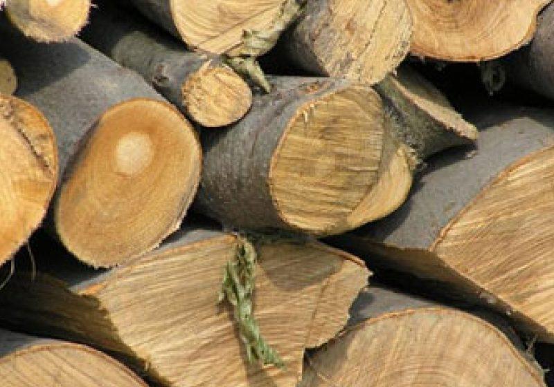 Trei bărbaţi din satele învecinate cu Ocna Şugatag vor răspunde penal pentru tăiere ilegală de arbori