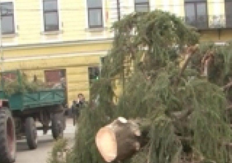 SIGHET: Bradul de Crăciun ce urma a fi montat în centrul oraşului s-a rupt de la jumatate astazi in parcul central al municipiului