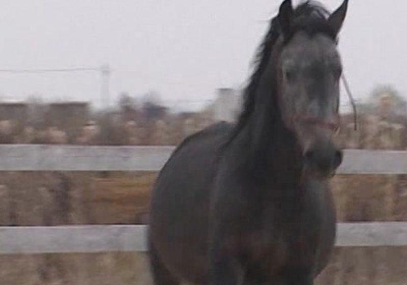 Maramureş: Scandal în urma unei  tranzacţii cu cai