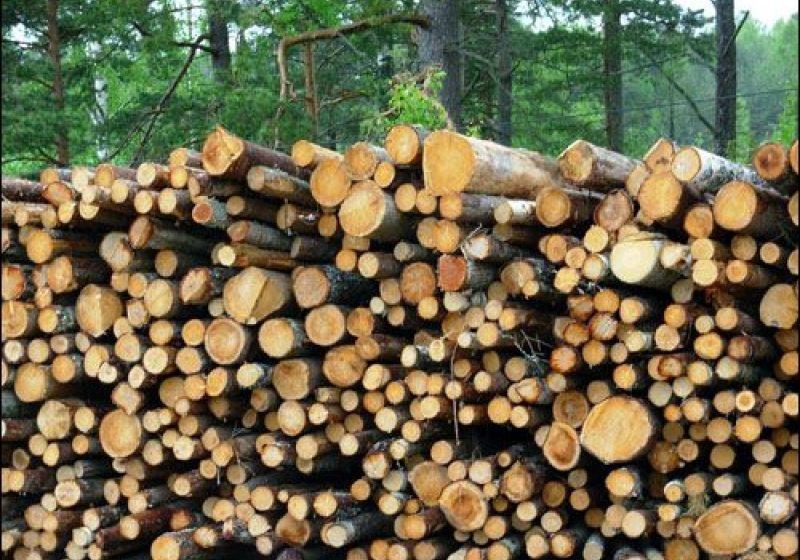 Poliţiştii au identificat la marginea oraşului Borşa, 27 de metri cubi lemn de brad şi molid
