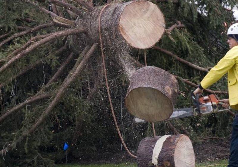 Un bărbat din Repedea a murit zdrobit de arborele pe care îl tăia