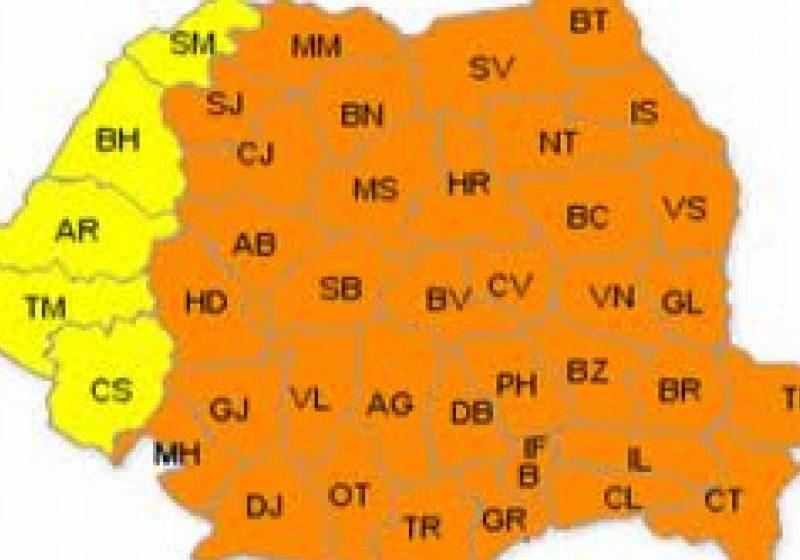 Cod portocaliu de ger persistent în Maramureş