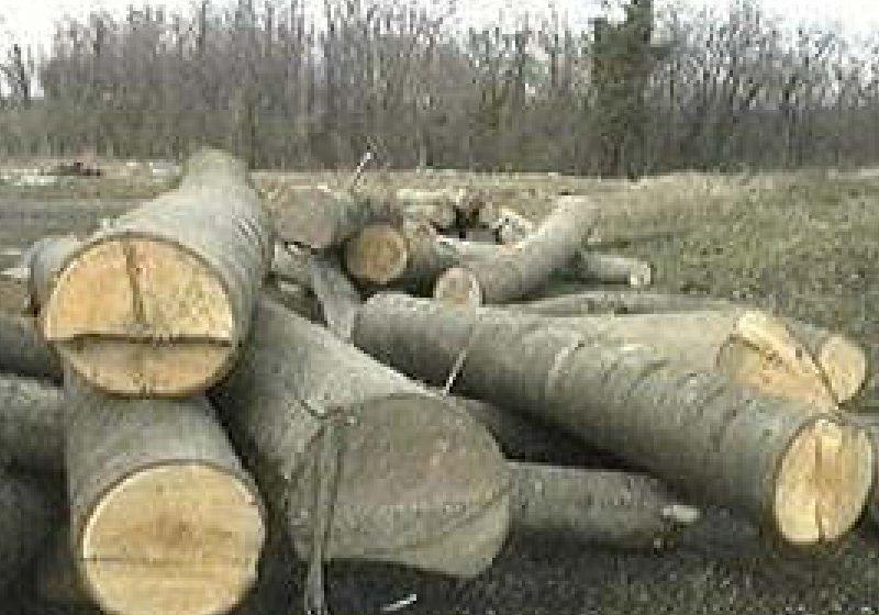 """Prins la furat de lemne în """"Dealul Morii"""""""