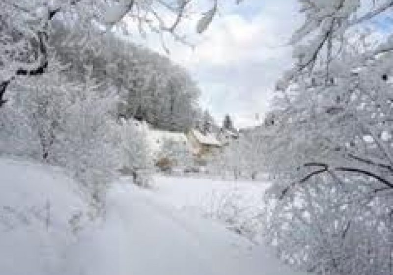 Cod galben de ninsori şi viscol, în Bucureşti şi 30 de judeţe, până joi seara