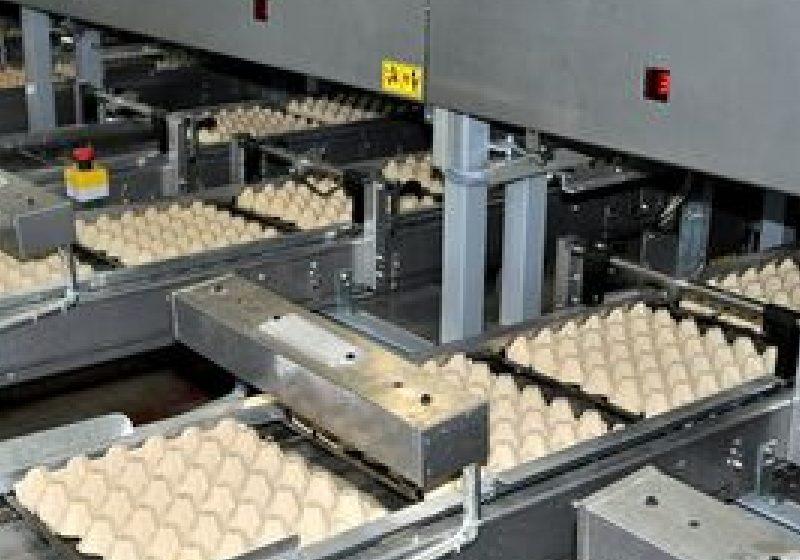 Ouăle marcate cu cifra 3 nu mai pot fi comercializate din ianuarie 2012