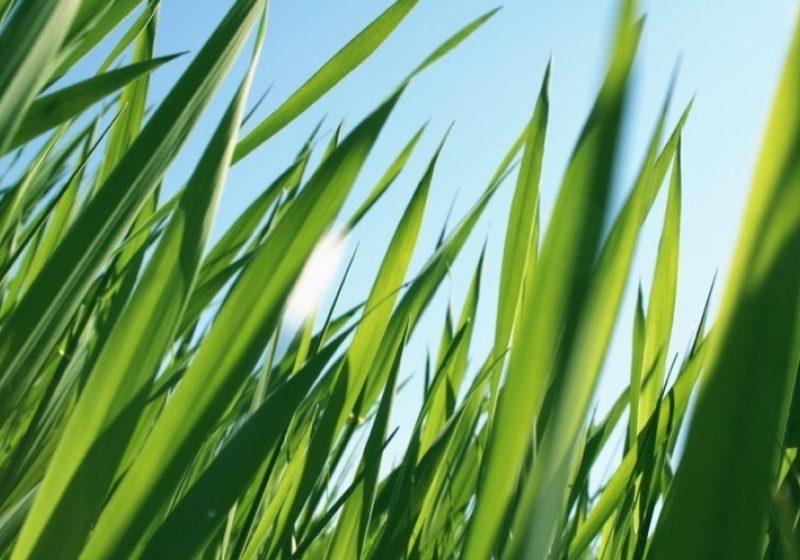 SIGHET: Muncitorii care asigura curăţarea şi întreţinerea spaţiilor verzi din municipiu s-au apucat de treaba