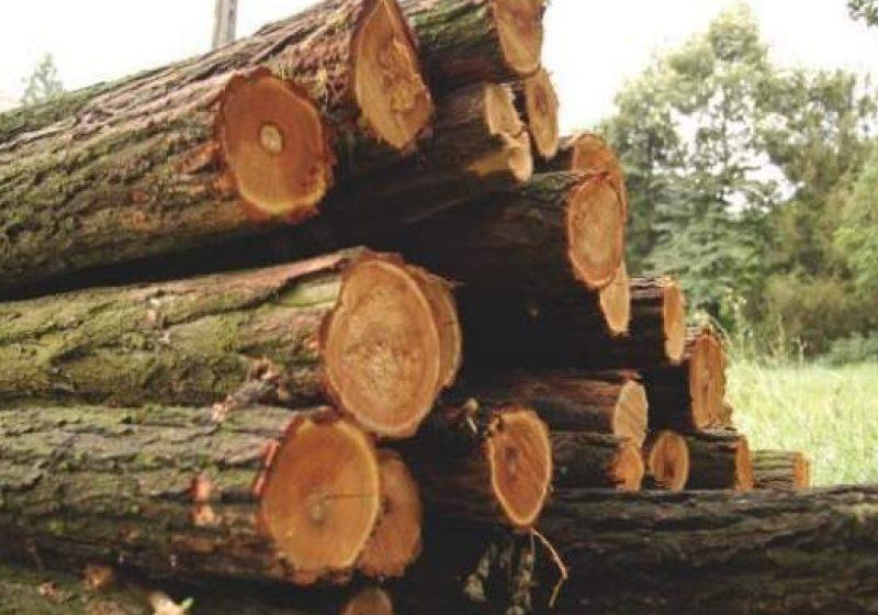 Fiindcă transporta ilegal lemne, un bărbat din Ruscova a primit o amendă mult mai mare decât lemnul transportat