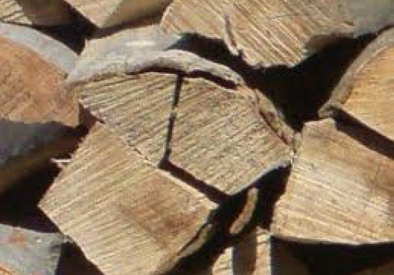 Tăiere ilegală de arbori la Ocna Şugatag