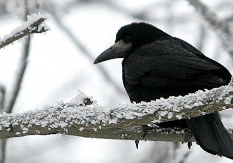 Maramureş: Temperaturi negative extreme prognozate la noapte în zonele depresionare din judeţ!