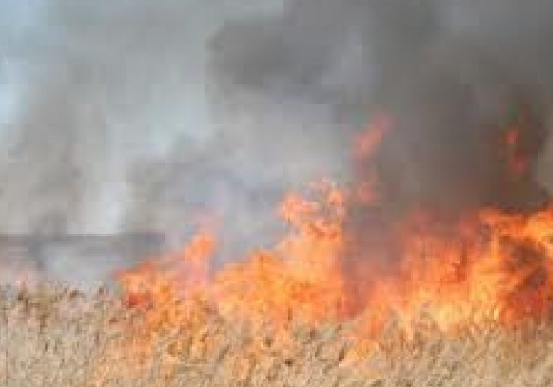 Pompierii au fost nevoiţi să intervină la nu mai puţin de 9 incendii de vegetaţie uscată, care au afectat o suprafaţă de circa 60 de hectare de teren