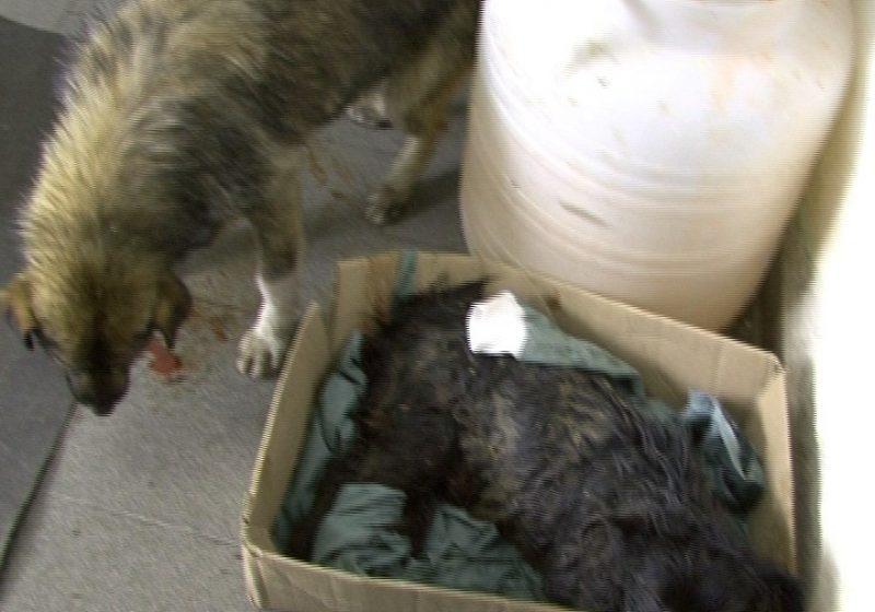 SIGHET: Plângere la poliţie pentru câinii dispăruţi