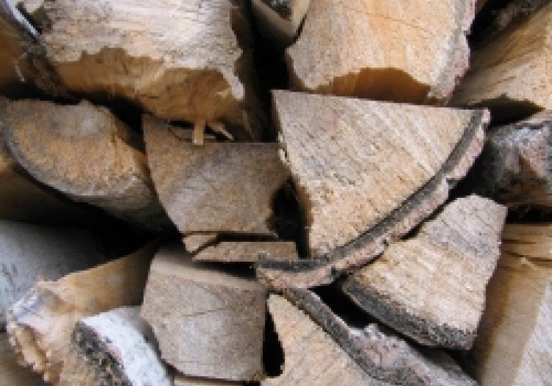 Ocolul Silvic Târgu Lăpuş vânează hoţii de lemne