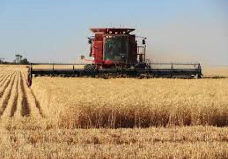 DATE OFICIALE: România, al șaselea producător de cereale din UE