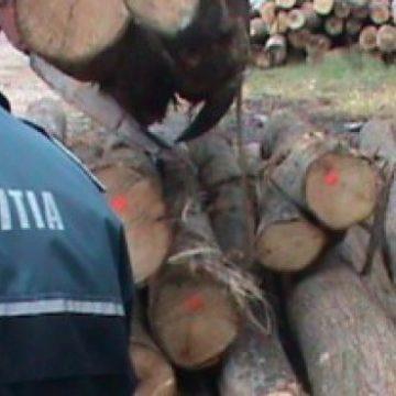 VIDEO | Lemnele la control: dosare penale și amenzi de zeci de mii de lei