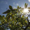 Ce vreme ne paște azi în Maramureș