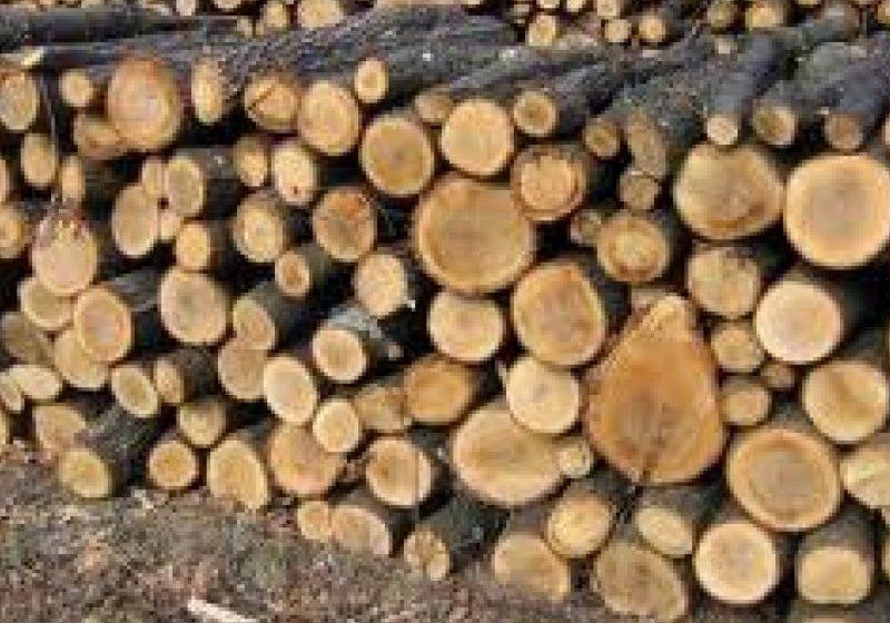 A PĂȚIT-O: Transporta mai multe lemne decât avea în acte și a rămas fără ele