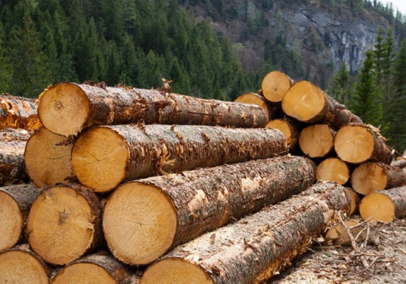 VIDEO | Pe urmele hoților de lemne – percheziții în Ruscova și Poienile de sub Munte