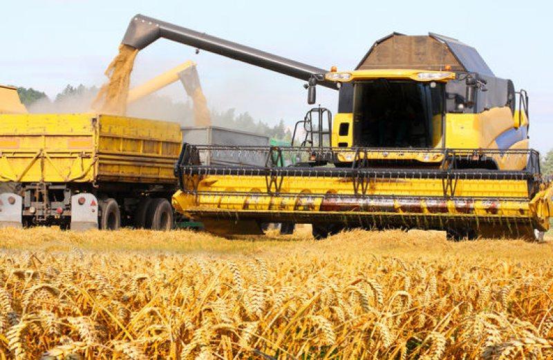 PRODUCȚII RECORD: Acesta va fi cel mai bun an din istorie pentru agricultura românească